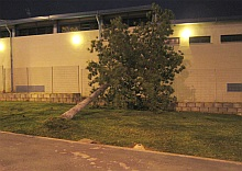 Árbol caído ayer por el fuerte viento