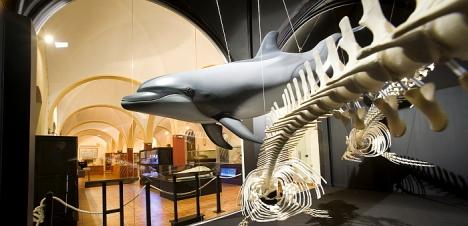Museo de Historia Natural de Torrevieja