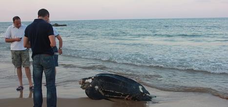 Una de las tortugas arriba a las costas de Torrevieja (IArchivo Ayto.)