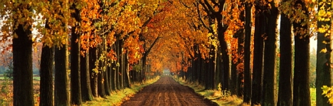 LANE LINED WITH TREES IN FALL COLORS, AUTUMN, HOLLAND