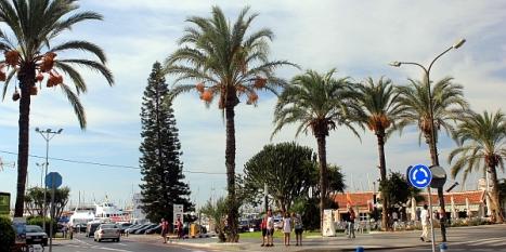Pino de Cook a la entrada del Puerto de Torrevieja, en el paseo Vistalegre (Fotografia: J.A. Pujol)