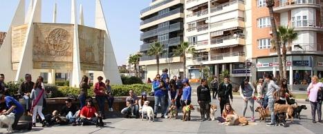 1.pasa calles perros abandonados 353