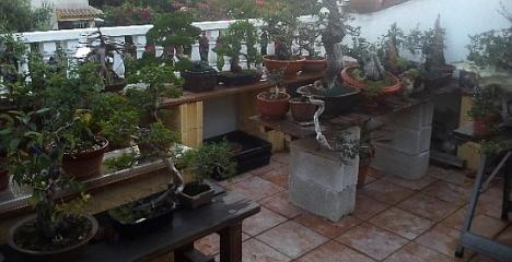 Centro de bonsai de Vicente Gálvez