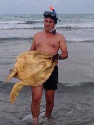 Momento de sacar la tortuga