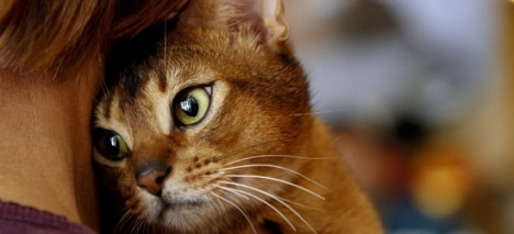 gato-mascota_th_86d085836c8204a4ef07c18efaea8ae1