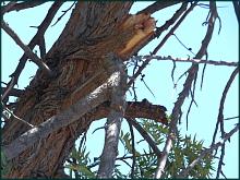 Detalle de la zona del árbol de donde se desprendió
