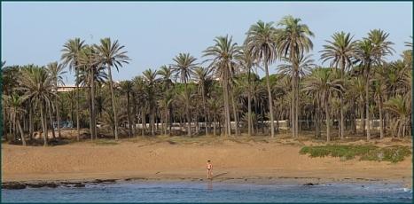 """Palmeral de Lo Ferris, desde el mar, antes del """"muro de la vergüenza"""""""