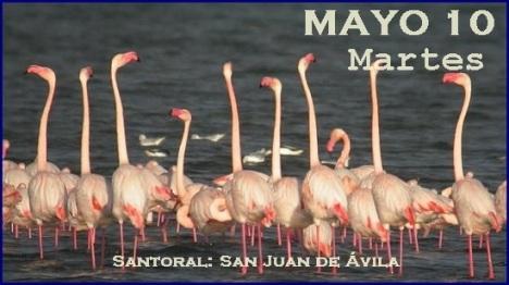 parque-Lagunas-Mata-Torrevieja-Alicante-flamencos_TINIMA20140823_0319_5