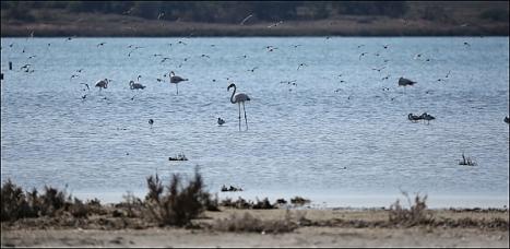 Flamencos en la Laguna (Foto: J. Carrión)