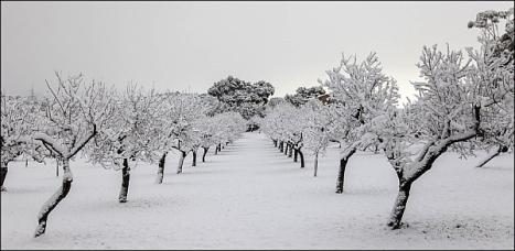 20120204_095318-nieve_mallorca